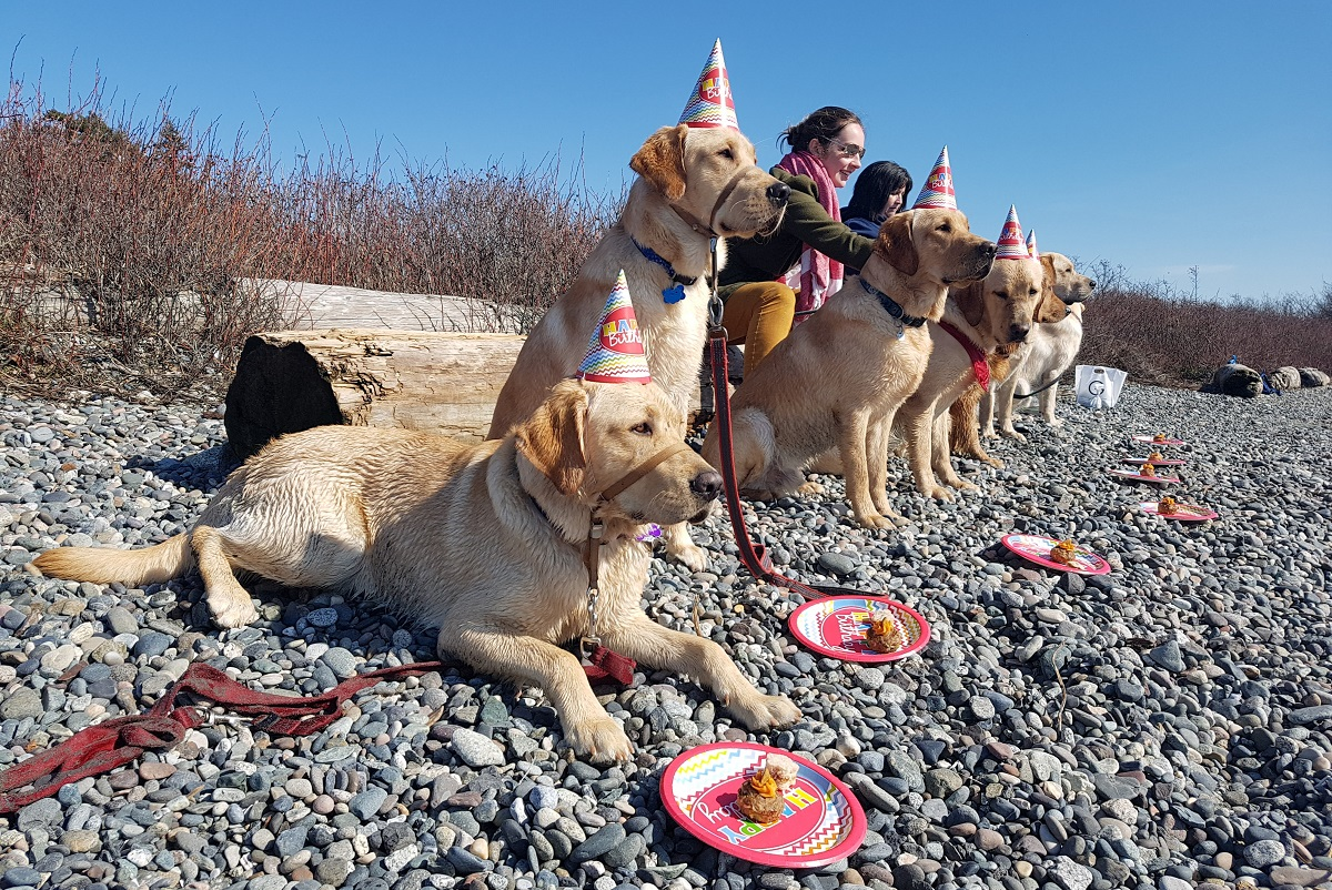 Dogs wear party hats and sit at a beach.